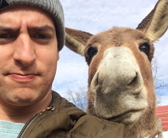 virginia donkey